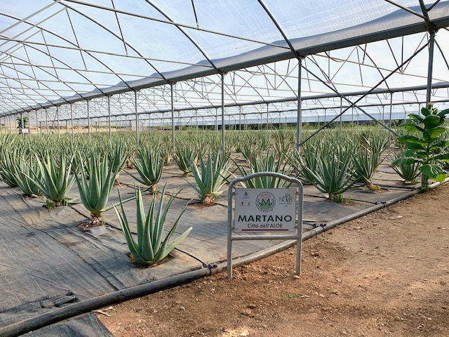 Città dell'Aloe